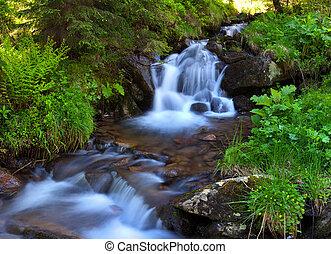 montanha, madeiras, fluxo, primavera