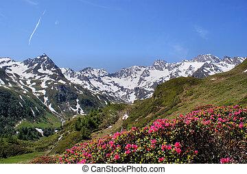 montanha, mundo, sul, tirol