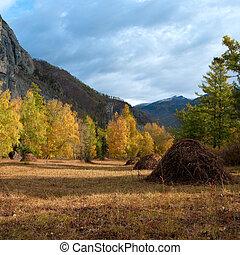 montanha, outonal, paisagem, floresta