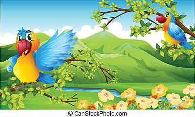 montanha, pássaros