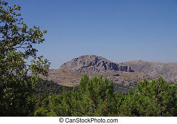 montanha, pinhos, região, gama, nevada., sierra, andalusia, espanha
