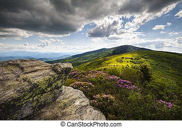 montanha, rhododendron, altiplanos, primavera, nc, rastro, paisagem, roan, flores, appalachian, jane, durante, ao longo, flores, calvo