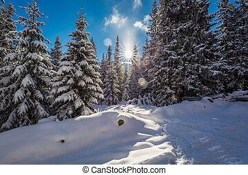 montanha, tatras, nevado, madeiras, polônia, rastro