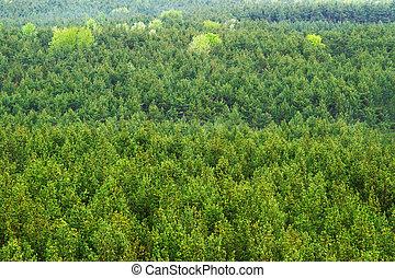 montanha, vista, aéreo, verde, floresta