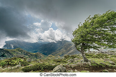 montanha windswept, cume, gr20, árvore, córsega