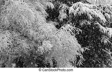 montanhas, árvore, neve, ramo, coberto