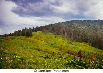 montanhas, árvores pinho