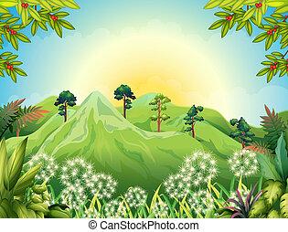 montanhas altas, em, a, floresta