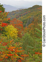 montanhas, esfumaçado, foliage