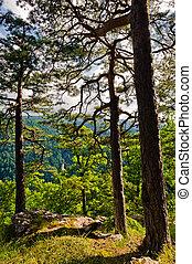 montanhas, floresta