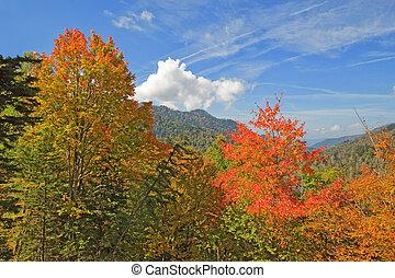 montanhas, grande, esfumaçado, parque, cedo, outono,...