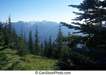 montanhas, noroeste, pacífico