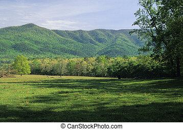 montanhas, prado