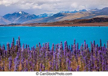 montanhas, primeiro plano, lago tekapo, florescer, paisagem, vista