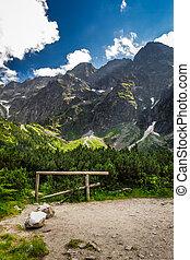montanhas rochosas, em, verão