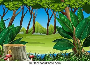montanhas, toco, cena, floresta árvore