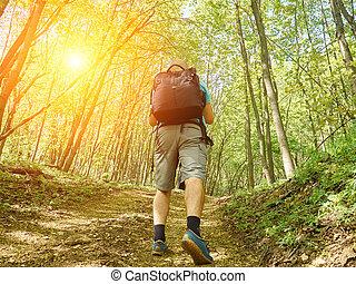 montant, piste, homme, forêt, promenade