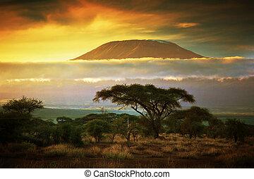 monte, kilimanjaro., savana, in, amboseli, kenia