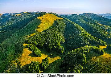 Montenegro forest - aerial