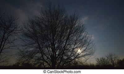 monter, derrière, arbre, lune
