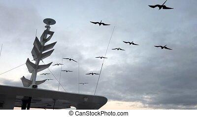 monter en flèche, suivant, mât, bateau, frégate, oiseaux, ...