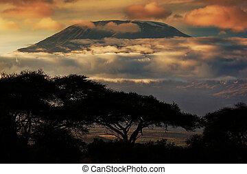 monter, kilimanjaro., savane, dans, amboseli, kenya