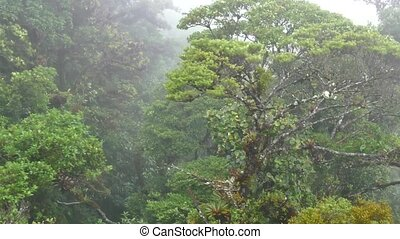 Monteverde National Park Costa Rica - View of Monteverde...