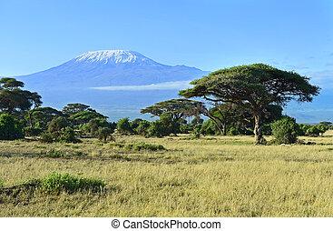 montez kilimanjaro