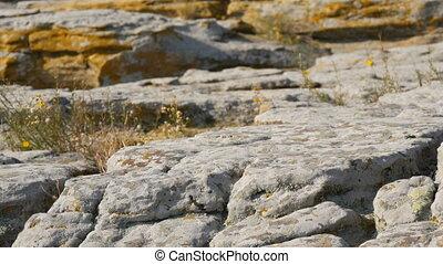 monument, réserve, mohyla, ukraine., sacré, célèbre, ancien, ou, énorme, pierre, galets, décoré, tombe, mondiale, gens, tombe, kamyana, endroit, il, petroglyphs., historique