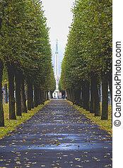 monumento conmemorativo, riga, latvia., libertad, matado, 1918-1920., letón, monumento, soldados, honores, durante, guerra, independencia