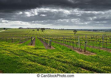 Moody Vineyard - Dark clouds over a vineyard in the Barossa...