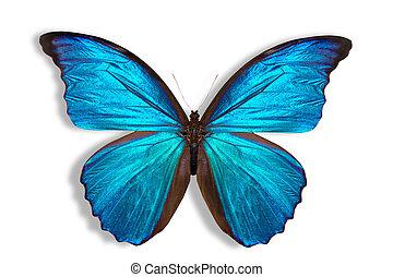 mooi, achtergrond, vlinder