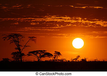 mooi, afrika, ondergaande zon , safari