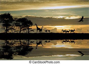 mooi, afrikaan, themed, silhouette, met, verbazend, de hemel van de zonsondergang