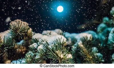 mooi, avond, winter, zacht, landscape, sneeuwval, sneeuw, video, bos, moonlit, het vallen, nacht, lus