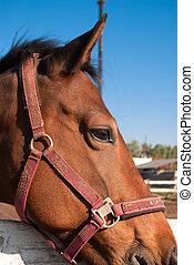 mooi, because, fencing., blik, verticaal, horse.