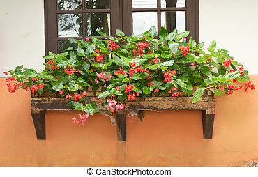 mooi, begonia, buiten, venster