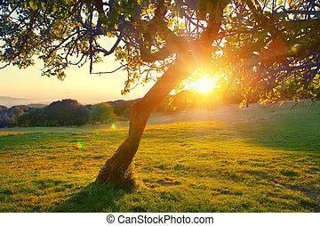 mooi, berg, natuur, landschap., alpien, weide, met, een, boompje, op, ondergaande zon