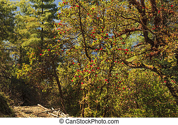mooi, bergen, herfst bos