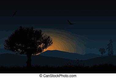 mooi, blauwe , boompje, morgen, zonopkomst, landscape