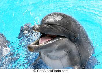 mooi, blauwe , duidelijk, dolfijn, zonnig, water, blij, het glimlachen, dag, pool, zwemmen