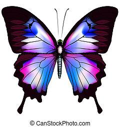 mooi, blauwe , vector, vlinder, vrijstaand