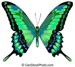 mooi, blauwe , vlinder, vrijstaand, illustratie, vector, groene achtergrond, witte