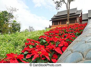 mooi, bloem, houten, poinsettia, kerk, kerstmis, rood, aanzicht