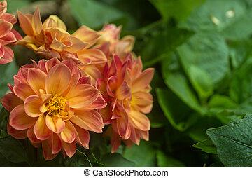 mooi, bloem