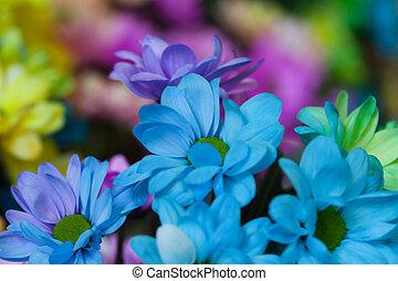 mooi, bloemen, kleurrijke