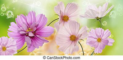 mooi, bloemen, op, abstract, lente, natuur, achtergrond