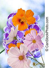 mooi, bloemen, op, abstract, zomer, natuur, achtergrond