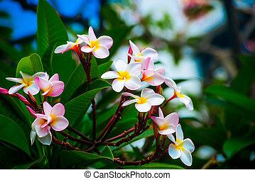 mooi, bloemen