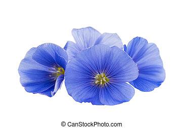 mooi, bloemen, van, vlas, vrijstaand